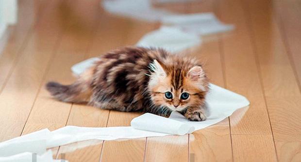 Как уберечь туалетную бумагу от котенка
