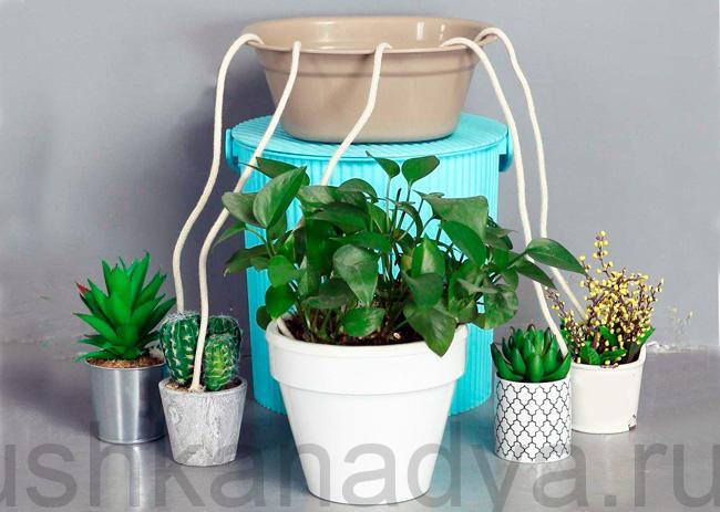 Автополив домашних растений